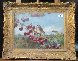 Harrison Weir (British 19th Century), goldfinch upon a cherry branch, signed and dated 1875,