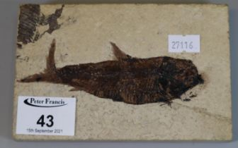 Natural stone tablet with fossilised fish. 14.5cm long. (B.P. 21% + VAT)
