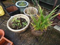 Quantity of Glazed Garden Planters