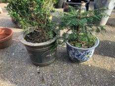 2x Glazed Planters and Contents