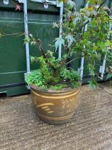 Glazed Garden Planter and Shrub - 36cm H