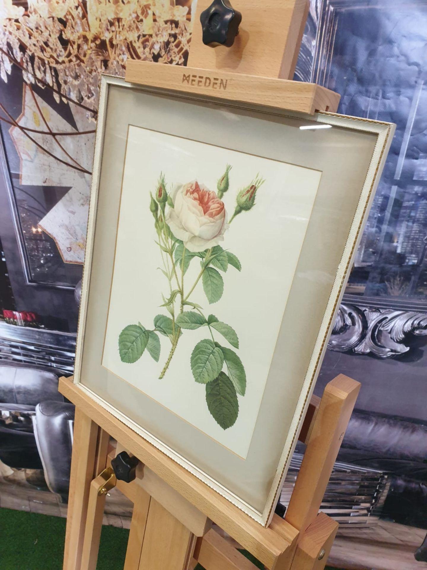 Framed botanical vintage print Pink Rose (Rosa Muscosa Multiplex)-Joseph Redouté (1759 –1840),