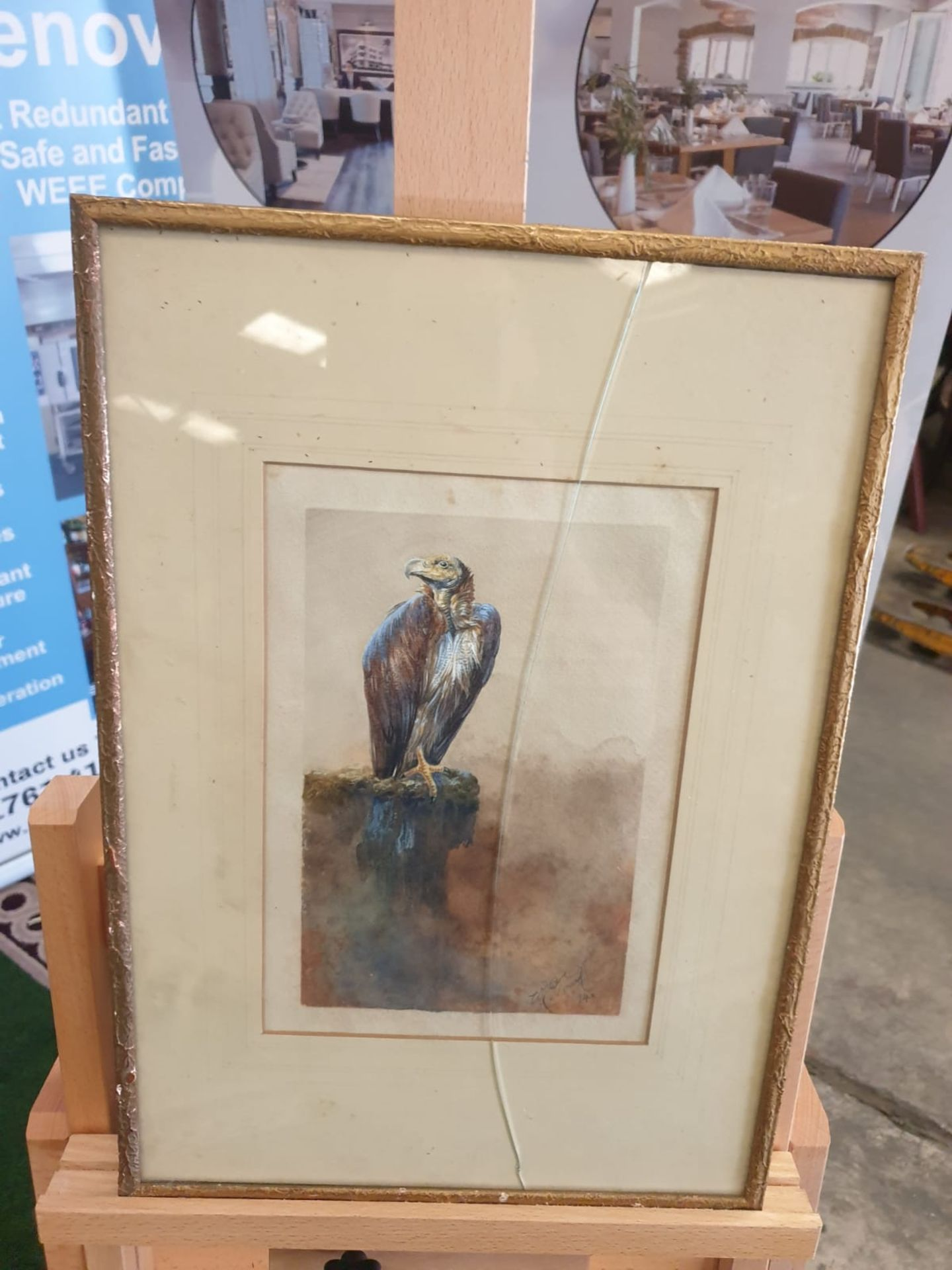 Framed Watercolour William E Powell [British 1878-1955] Vulture. Watercolour on paper. Signed and