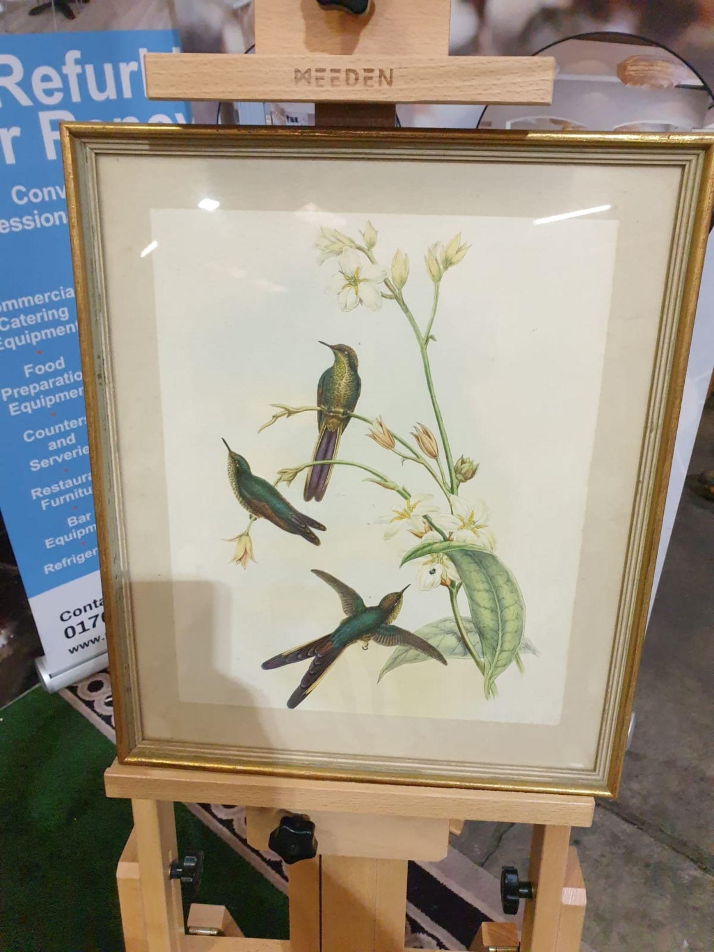 Framed coloured lithograph Sparganura Glyceria, from 'Tropical Birds' (Sparganura Glyceria, from - Image 4 of 5