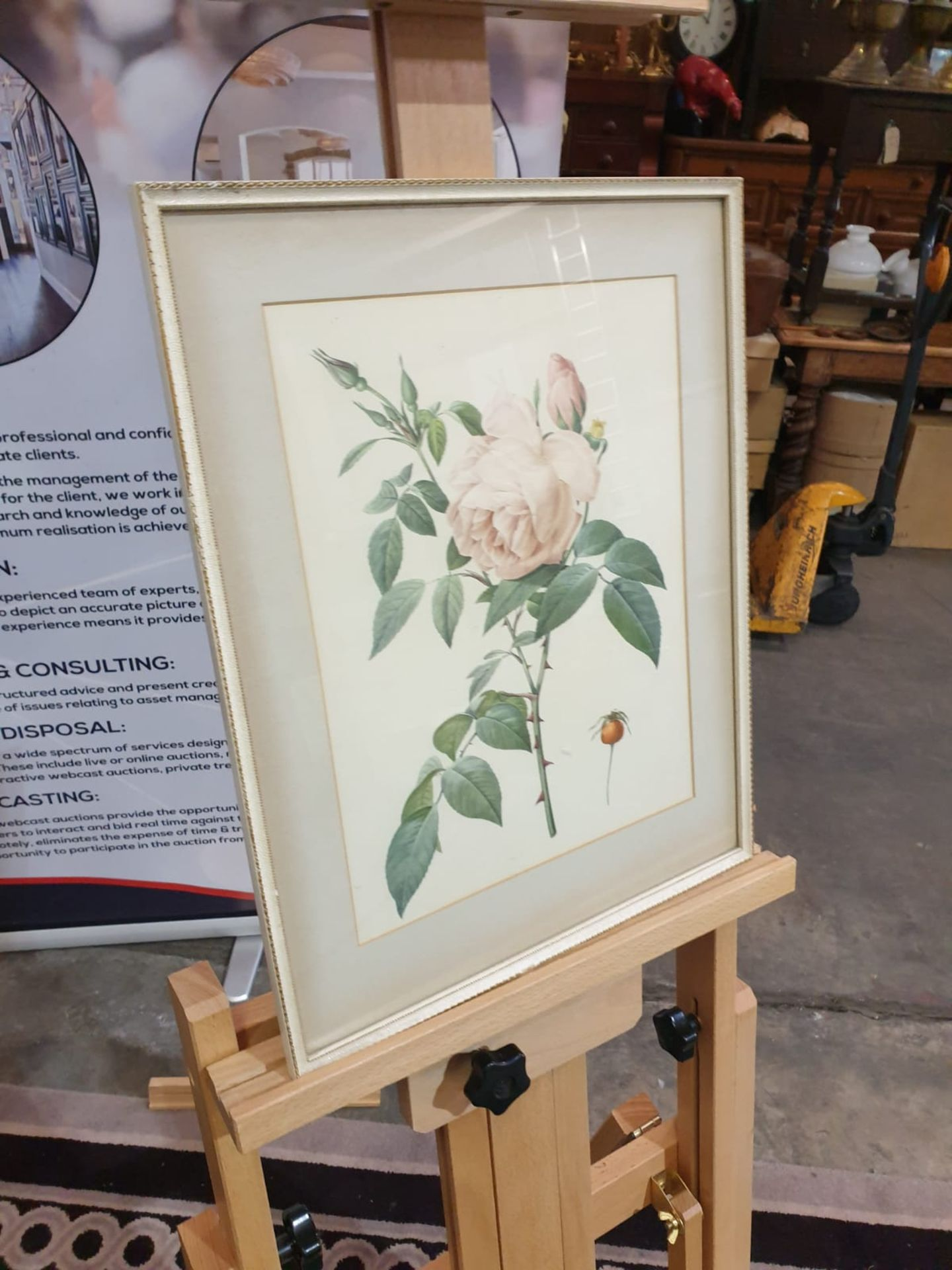 Framed coloured print Rosa Indica Fragrans, engraved by Langlois, published by Remond (coloured