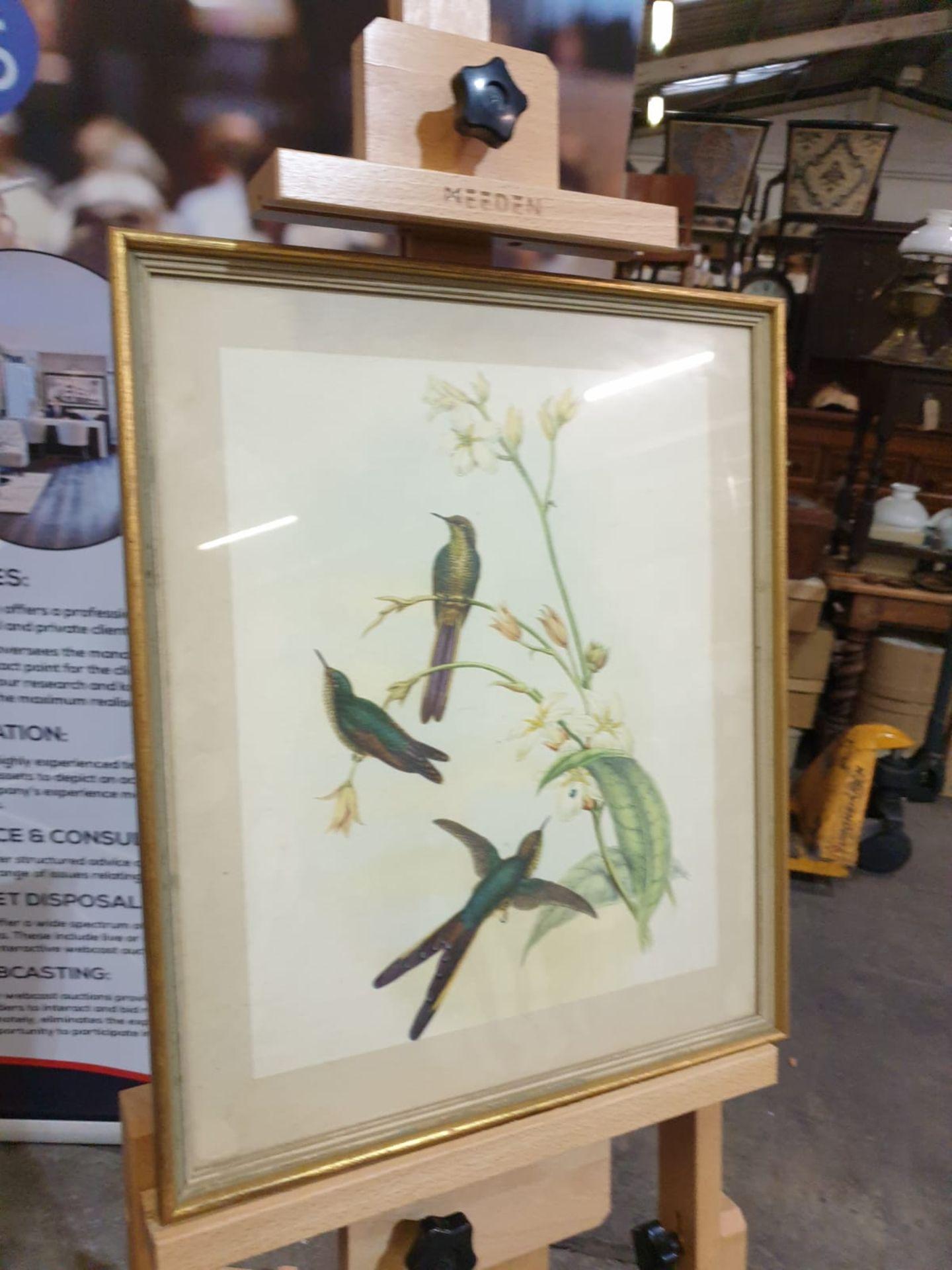 Framed coloured lithograph Sparganura Glyceria, from 'Tropical Birds' (Sparganura Glyceria, from