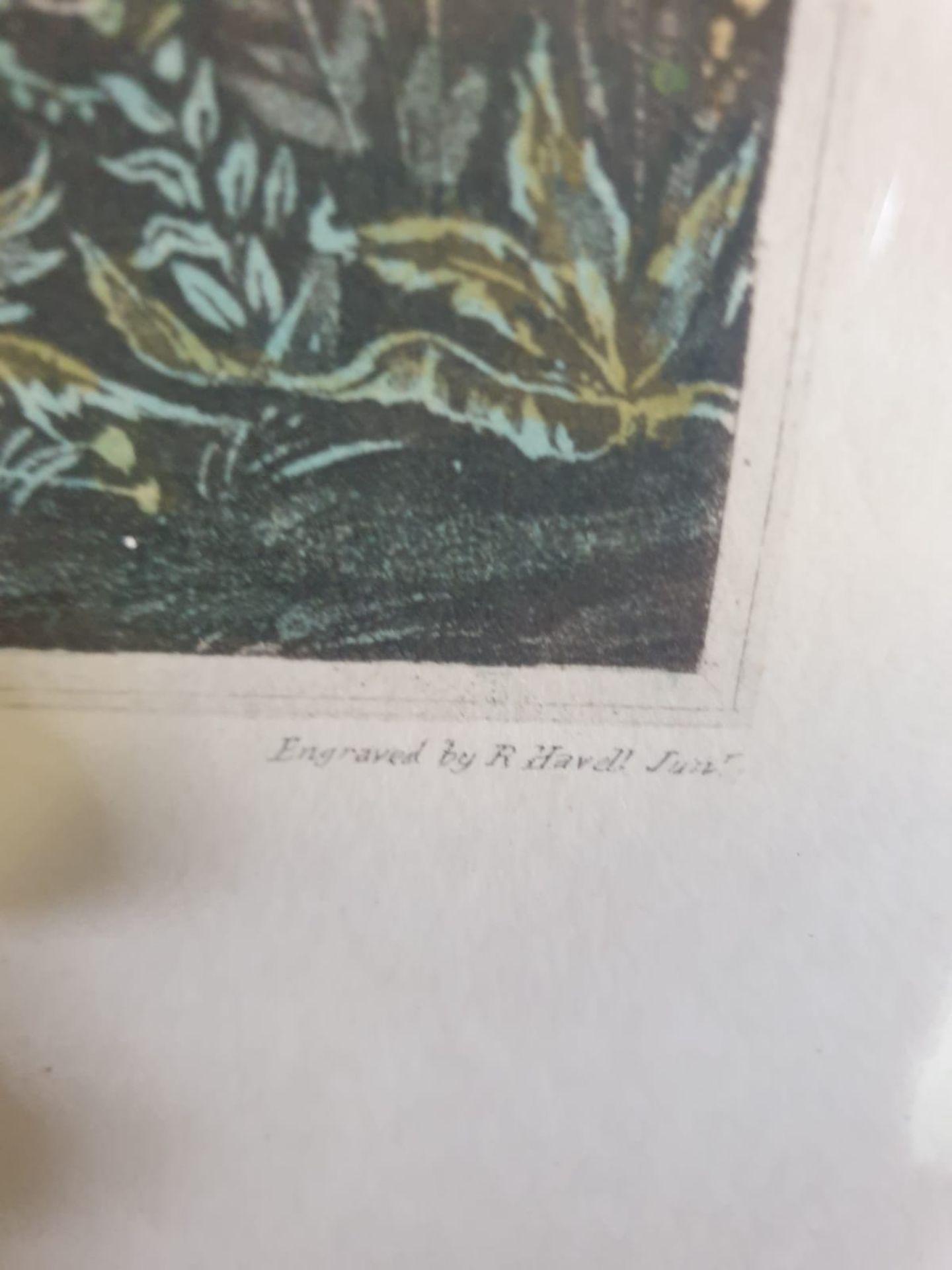 Framed vintage aquatint Pheasant Shooting. Black Park near Uxbridge. HAVELL Jr., Robert. - Image 5 of 6