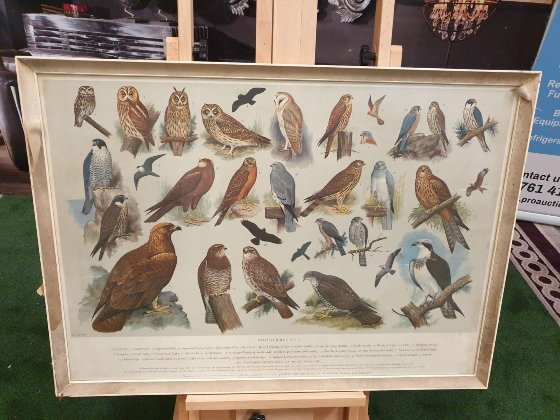A set of 5 framed series 1 – 5 coloured prints pictorial charts RSPB on British Birds H J Slyper - Image 4 of 7