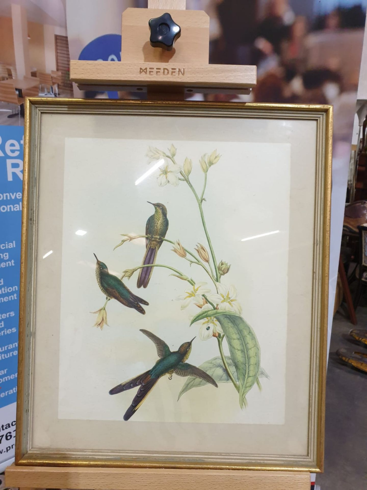 Framed coloured lithograph Sparganura Glyceria, from 'Tropical Birds' (Sparganura Glyceria, from - Image 3 of 5