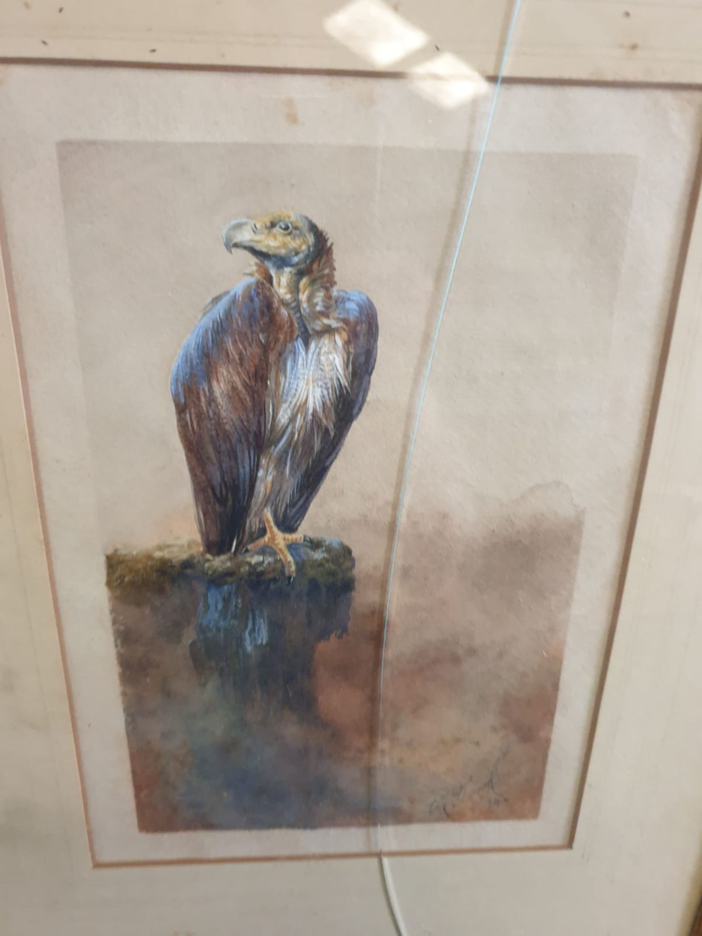 Framed Watercolour William E Powell [British 1878-1955] Vulture. Watercolour on paper. Signed and - Image 4 of 4