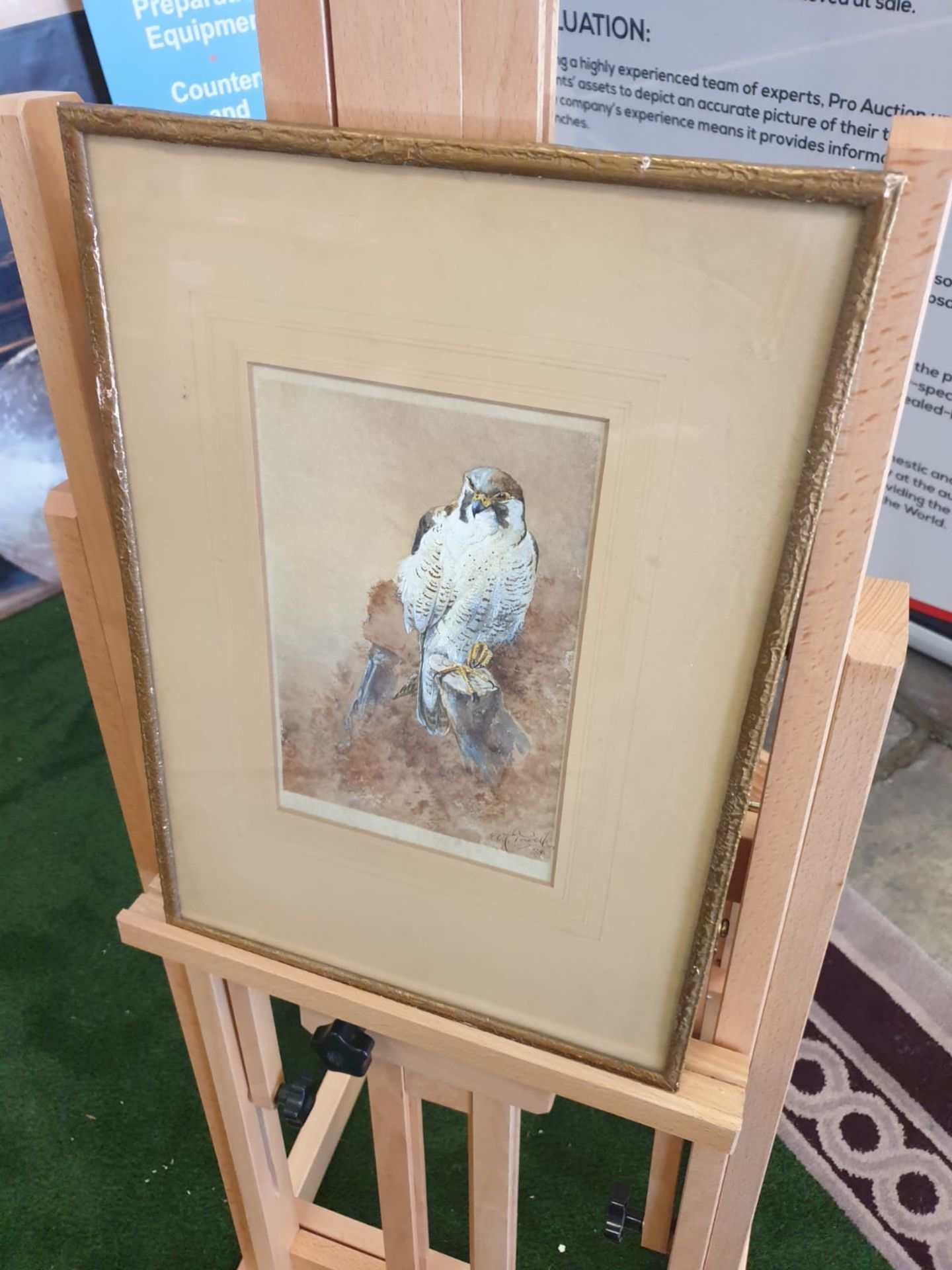 Framed Watercolour William E Powell [British 1878-1955] A Sparrow Hawk on a crag. Watercolour on