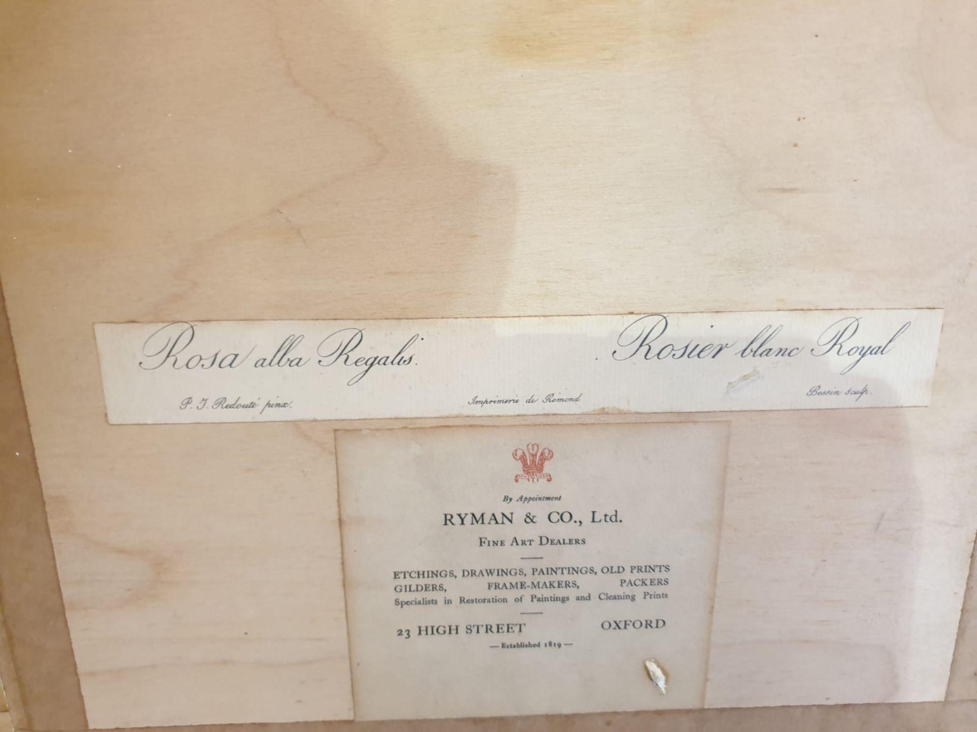 Framed botanical vintage print Rosa alla Regalis Pierre-Joseph Redouté (1759 –1840), was a - Image 3 of 3