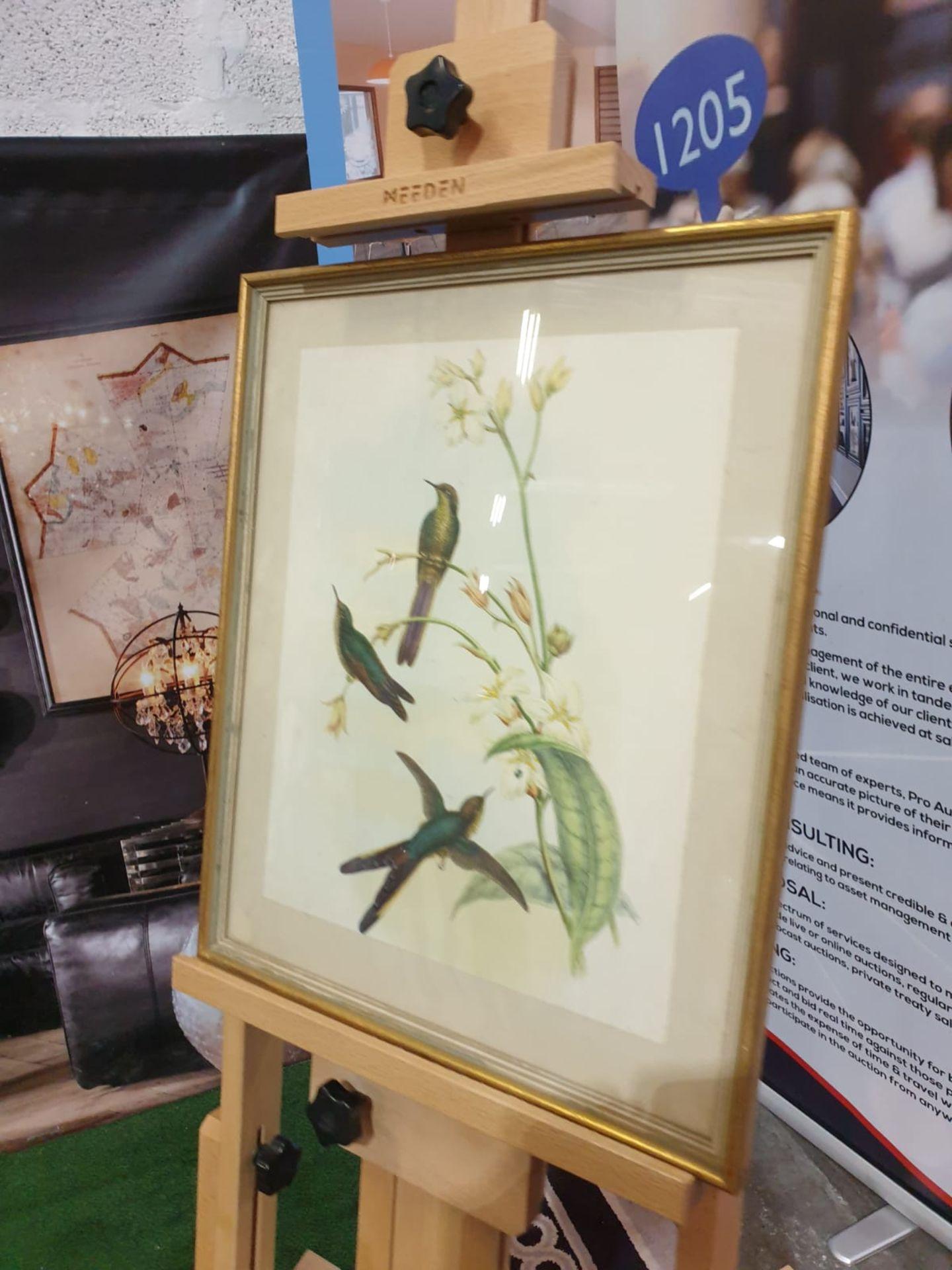Framed coloured lithograph Sparganura Glyceria, from 'Tropical Birds' (Sparganura Glyceria, from - Image 2 of 5