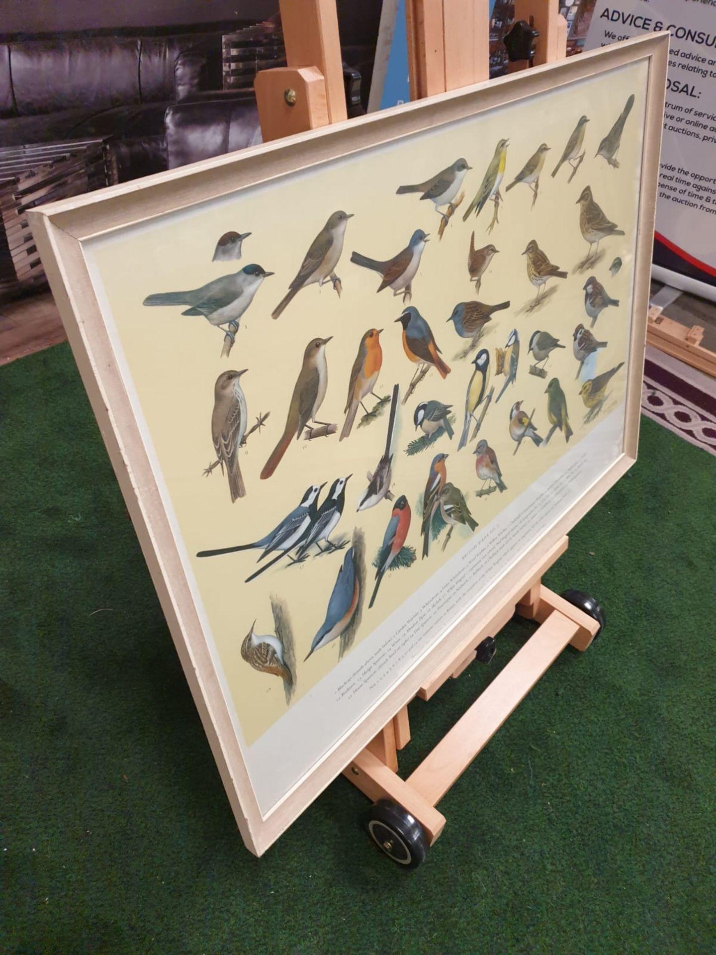 A set of 5 framed series 1 – 5 coloured prints pictorial charts RSPB on British Birds H J Slyper - Image 6 of 7