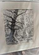 """TREES 10"""" X 12"""" SIGNED PEN & INK"""