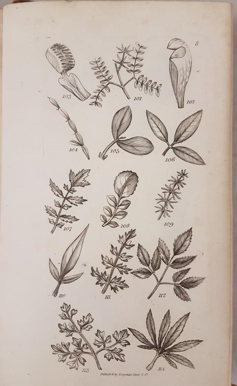 An Introduction to Physiological and Systematical Botany, James Edward Smith, Longman, Hurst, Rees - Image 4 of 4