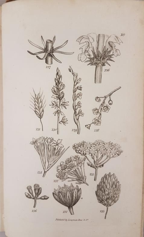 An Introduction to Physiological and Systematical Botany, James Edward Smith, Longman, Hurst, Rees - Image 3 of 4