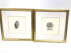 R. Jackson, engraving, Kiwi, 35/150, signed in pencil and another, Morepork, 80/95, signed in pencil