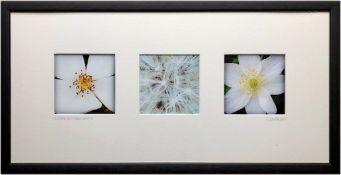 CERI LEIGH photo series Entitled 'Flower textures White 67cm x 34cm glazed and framed in white