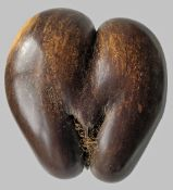POLISHED COCO DE MER SEED (Lodoicea maldivica), of typical form, 24cms high Provenance: private