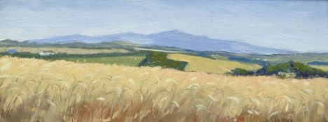 THOMAS HASKETT oil on board - landscape with cornfield, signed with initials, 11 x 30cms Provenance: