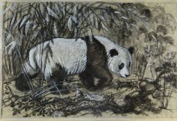 CHARLES FREDERICK TUNNICLIFFE OBE RA preliminary drawing in mixed media - study of a panda, 47 x