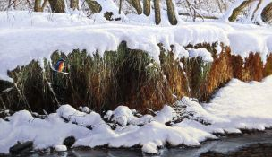 DAVID COWDRY oil on board - Kingfisher perched in snowy river-landscape, signed lower right and