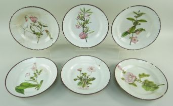 SIX SWANSEA PEARLWARE BOTANICAL PLATES BY THOMAS PARDOE circa 1802-1810, each botanical study