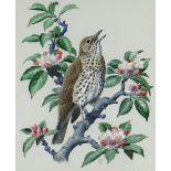 CHARLES FREDERICK TUNNICLIFFE OBE RA watercolour - study of a chirping song-thrush on a flowering