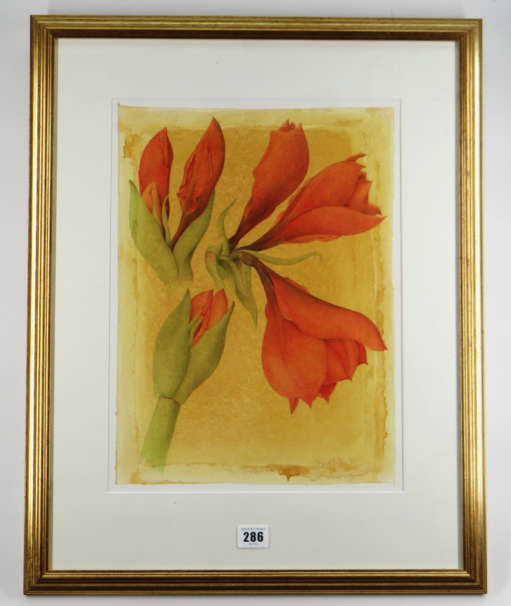 SIGRID MULLER mixed media - entitled verso on Attic Gallery Swansea label 'Amaryllis Study', signed, - Image 3 of 5