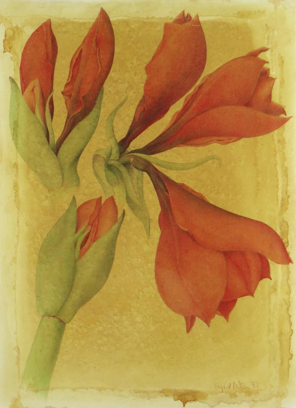 SIGRID MULLER mixed media - entitled verso on Attic Gallery Swansea label 'Amaryllis Study', signed, - Image 2 of 5