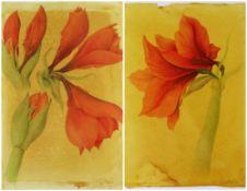SIGRID MULLER mixed media - entitled verso on Attic Gallery Swansea label 'Amaryllis Study', signed,