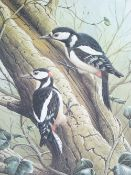 RALPH WATERHOUSE coloured limited edition print (478/750) - two woodpeckers on the trunk of a