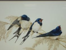 TERENCE LAMBERT fine watercolour - three swallows perched on corn stalks, signed, 26 x 46cms