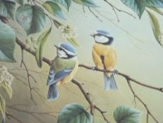 RALPH WATERHOUSE coloured limited edition print (537/750) - of two blue tits on a blossom branch,