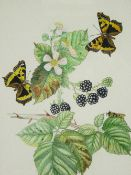 D RANDALL fine watercolour - still life of two butterflies on blackberry fruit and blossom,