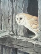 RALPH WATERHOUSE coloured guild stamped print - alert Barn owl peering out of a hole in timbers,