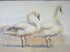 ERIC H DAY watercolour on card - study of two swans on sands, signed, 33 x 48cms