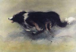 WILLIAM SELWYN artist proof colour print - a speeding sheep dog, signed in full, 40 x 56cms