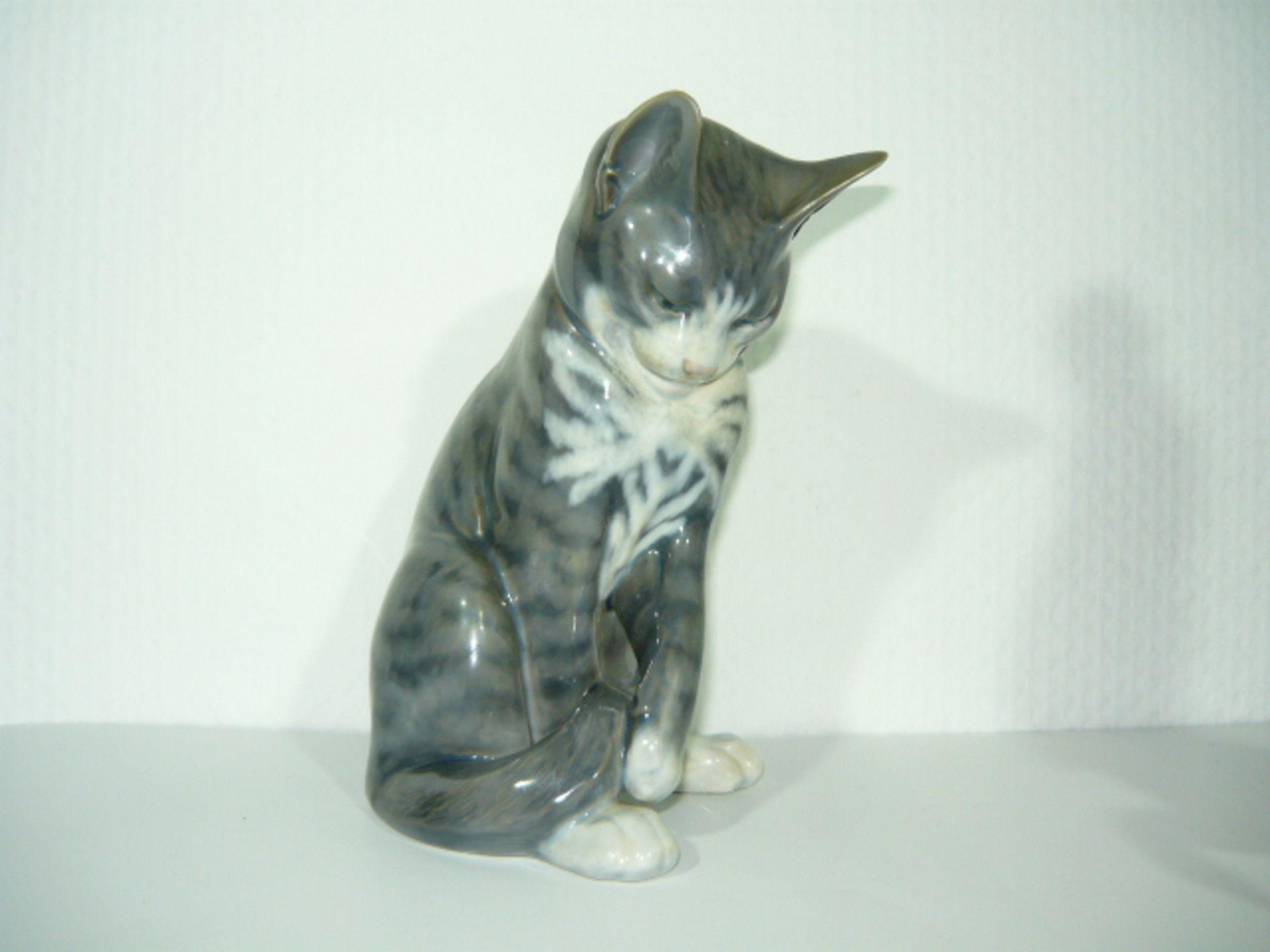 Royal Copenhagen. Große sitzende Katze. Naturalistische Unterglasurbemalunmg. II.W. H. ca. 20cm.