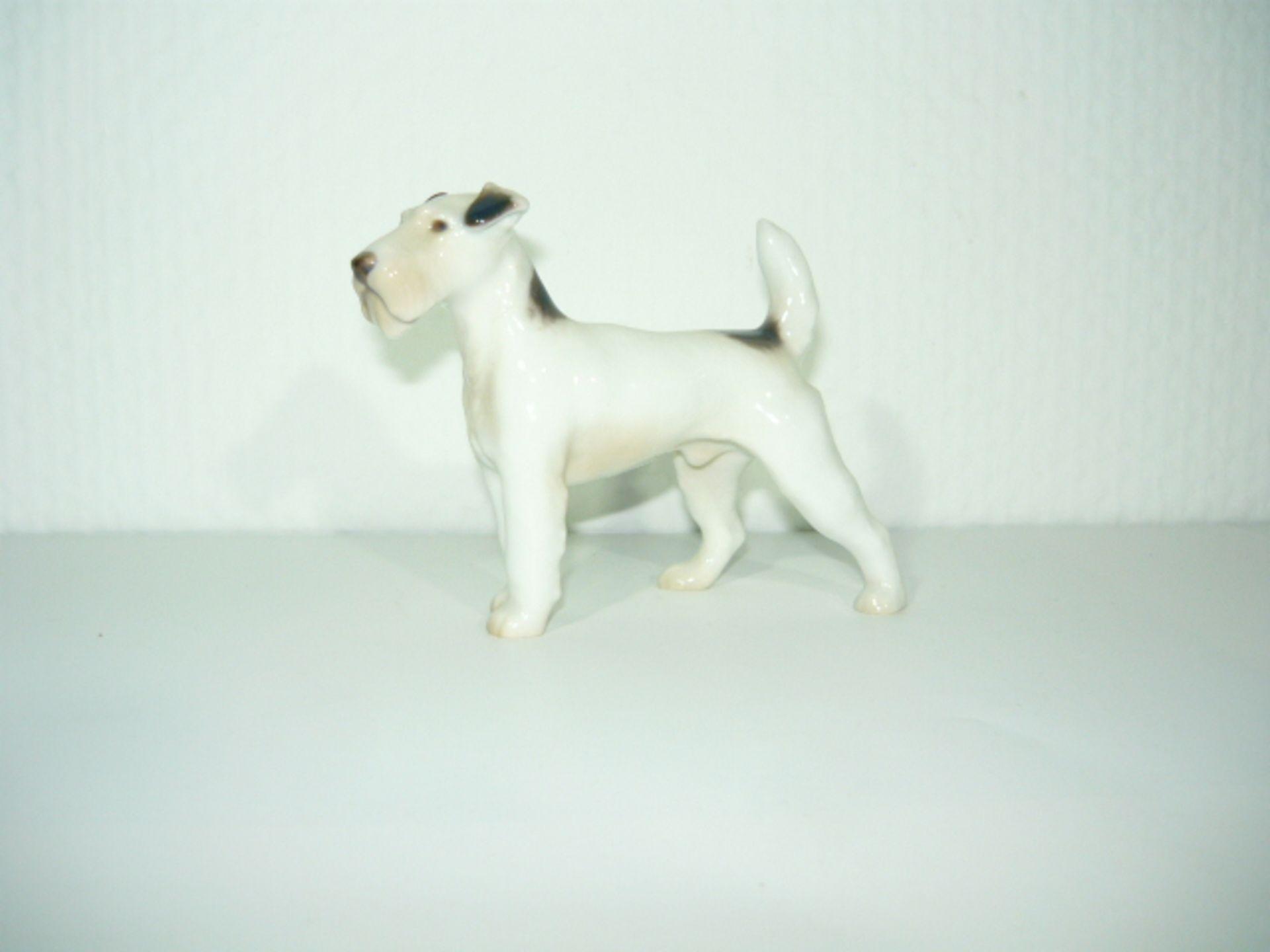 B&G Copenhagen. Stehender Terrier. I.W. Manufakturmarke ab 1915. L. ca. 12cm. KOSTENLOSER VERSAND