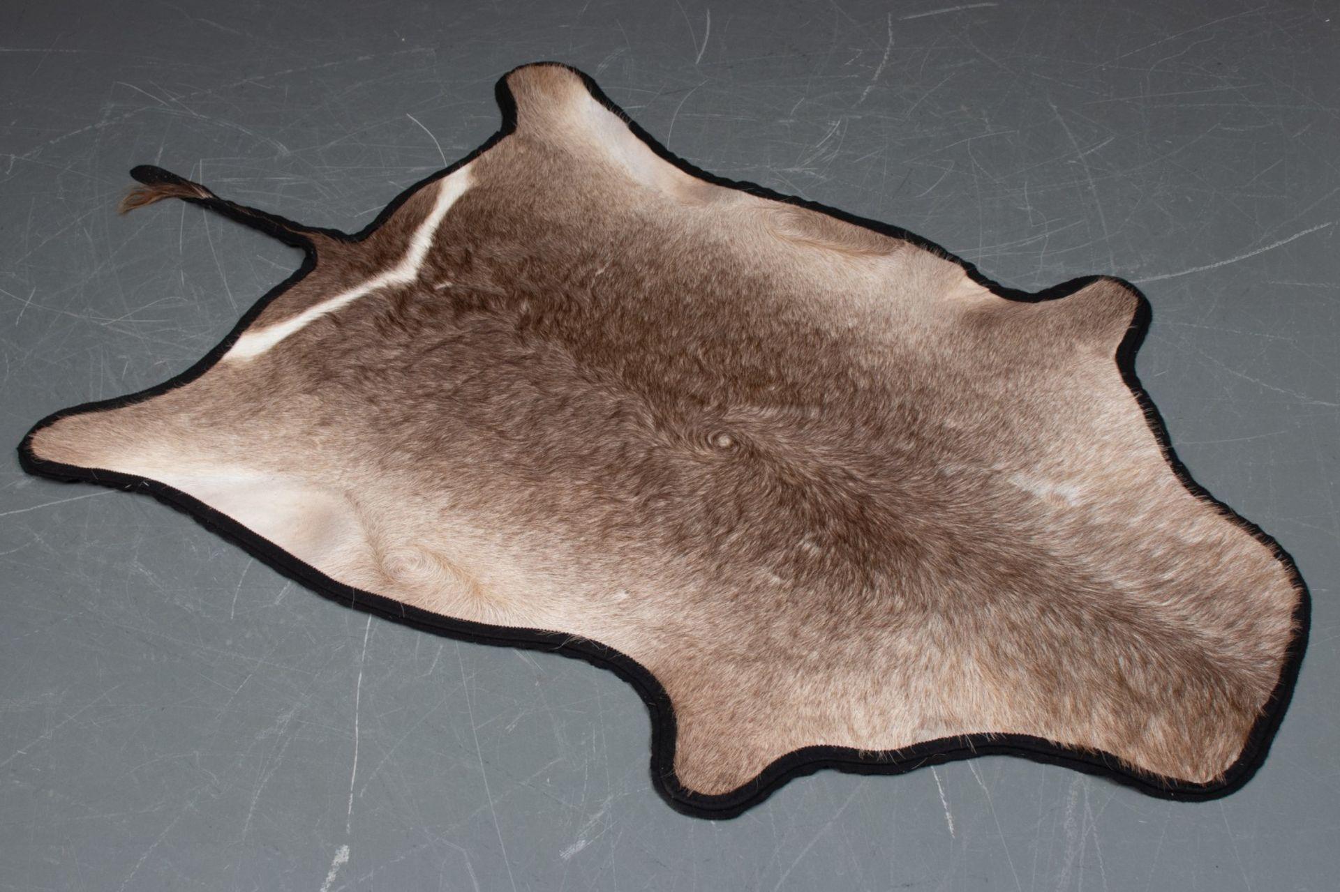 Antilopenfell. Auf Filz vernäht. Gesamtmaß inkl. Schwanz ca. 250x147cm. KOSTENLOSER VERSAND