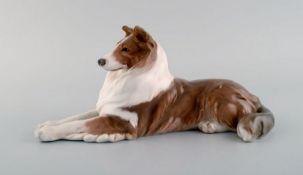Royal Copenhagen porcelain figurine. Lying collie. Model number 1701. 1920's. I.W. Ca. 30cm.