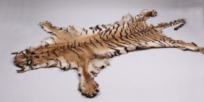 Tigerfell. Ca. 1960. Präparat eines Tigers. L: ca. 275 cm. Kein CITES Dokument - kein Versan