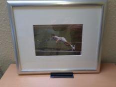 Framed Photo of Tim Henman, 55cm x 45cm