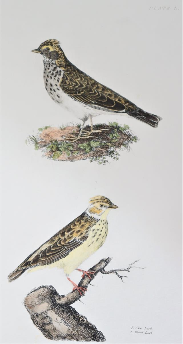P J Selby, Hand-Colored Engraving, Sky Lark - Image 4 of 8