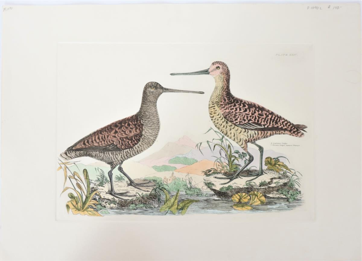 P J Selby, Hand-Colored Engraving, Snipes 19th C.