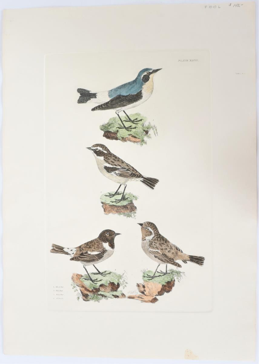 P J Selby, Hand-Colored Engraving, Wheat Ear - Image 2 of 4