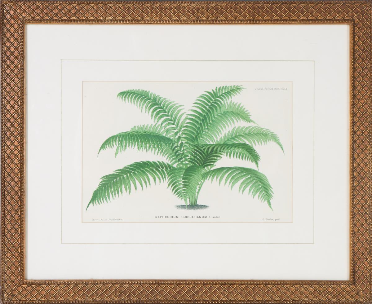 Vintage Botanical Print - Image 2 of 5