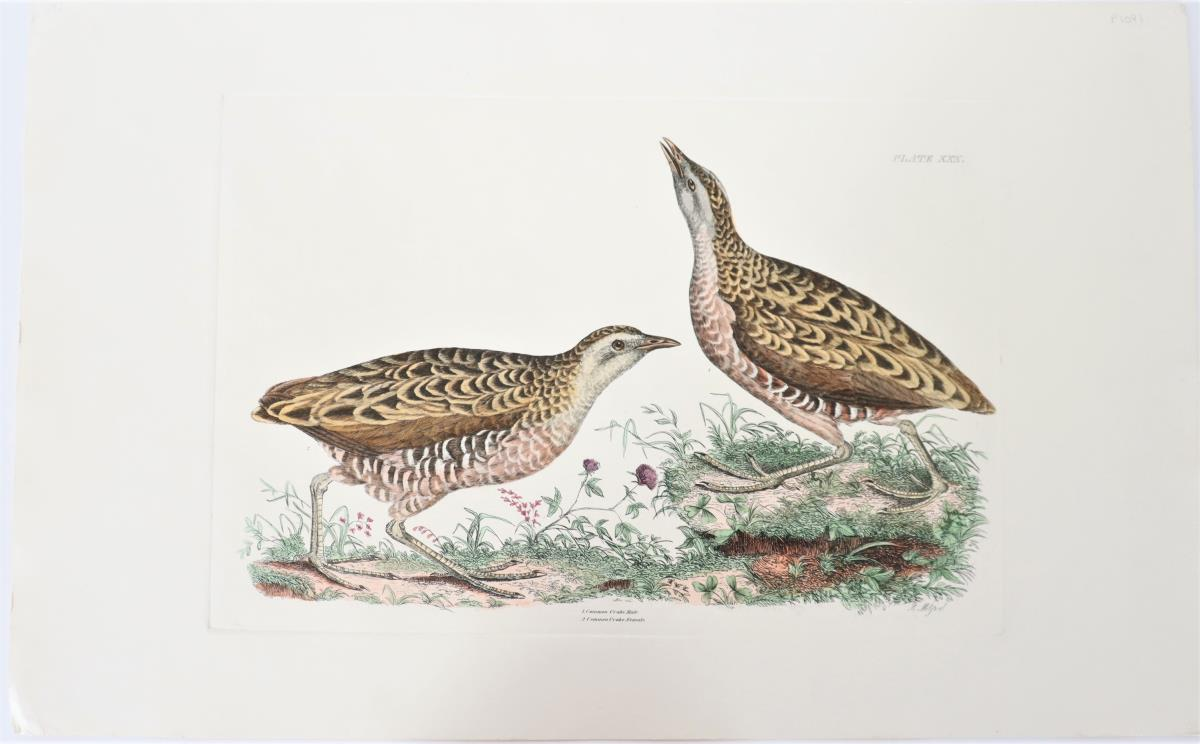 R Mitford, Hand-Colored Engraving, Common Crake 19